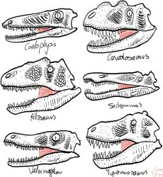 Theropods heads by Slugozaur