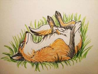 Fox in the grass by ElenPanter