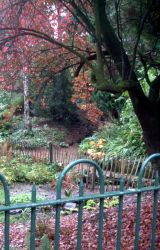 Autumn in Belfast by Sherezade