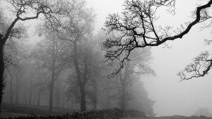 Surrounded By Mist II by anarchist-dream