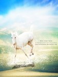 white water horse by passionforhorse