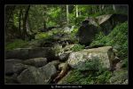 Smoky MTS-Timeless Perfection by ransim