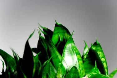 green plant by AlphaONE666