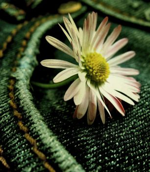 Daisy. by assica