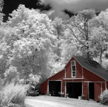 infrared photography 12 by Shim7