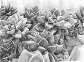 Succulent Study in pencils by KingVahagn