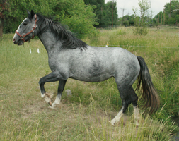 Blue Roan Stock 50 by tragedyseen