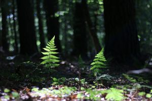 Palatinate Forest Stock 52 by Malleni-Stock