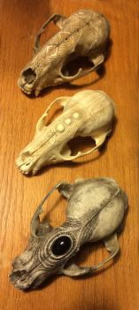 Three Raccoon Skulls by DonSimpson