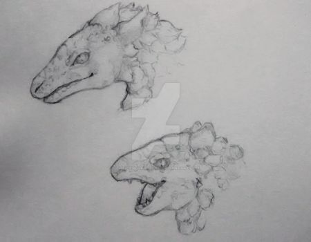 dragon headshot sketches by TheIcyWolfDragon