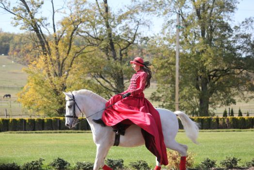 Lipizzaner Stock 21 by firenze-design