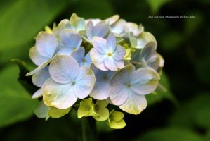 Flowers1 by livetodream215