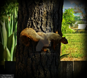Squirrel by KitKat37