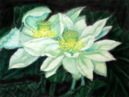 waterlily(2) by ChariotX