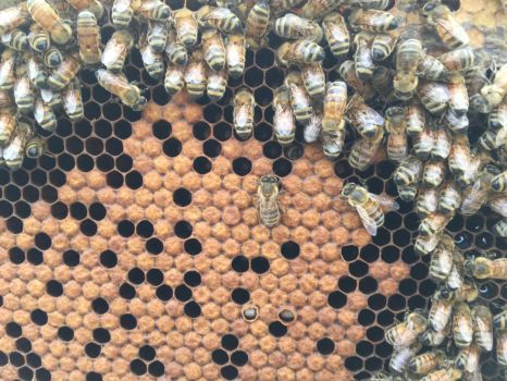 Brood Comb by Ahopper1996