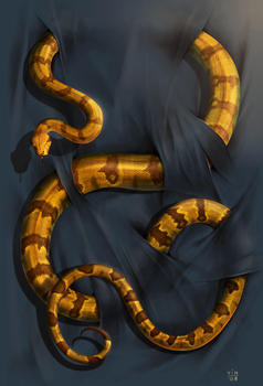 Boa Constrictor by wallace