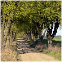 country road I by Wilithin