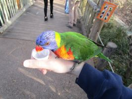 Feeding a Lorikeet at the Denver Zoo by kylgrv