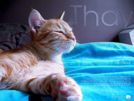 Thay, a cat life by M23creations