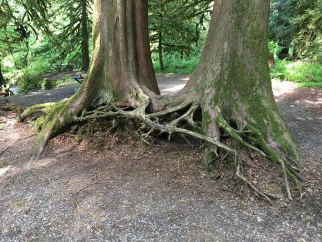 Entwined Roots by Queen-of-Ice101