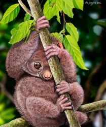 Shy Little Potto and Katydid by Psithyrus