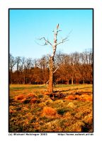 treedeadtree by mailfor