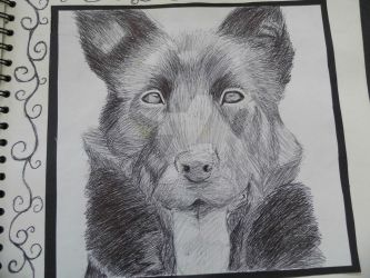 Biro Alsation - observational drawing by IWillLickYoFace