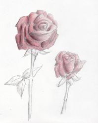 unfinished roses by Kristadidileey