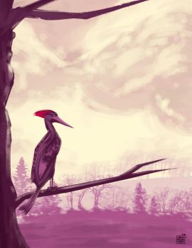 Somewhere a woodpecker by dakalister