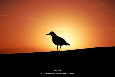 Seagull by too-much4you