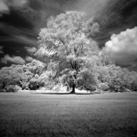 tree by ucilito