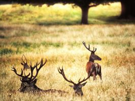 Dear Deer by Awstein