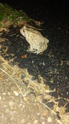 Toad by brandi3981