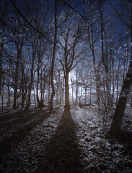Ashridge in Infrared 5 by bmh1