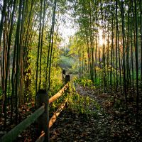 Bamboo Forest by incolor16