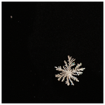 silver snowflake by analogphoto