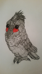 Chibi Black Palm Cockatoo by MagsGallery