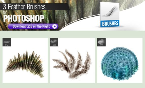 3 Photoshop Brushes for Painting Feathers by pixelstains