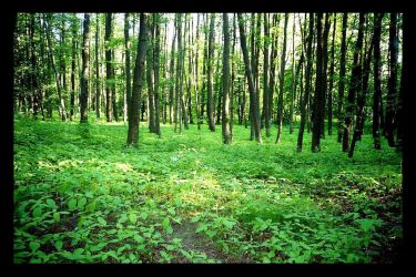 a very very green place by piraaja