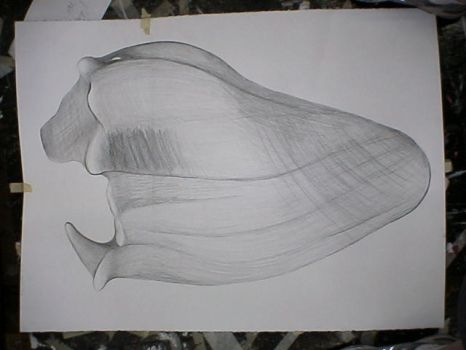 Seashell 1 by Silvering