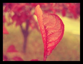 Red Leaf II by fartoolate