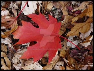 One Red Maple Leaf by Mogrianne