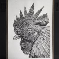 Rooster by zephyrxavier