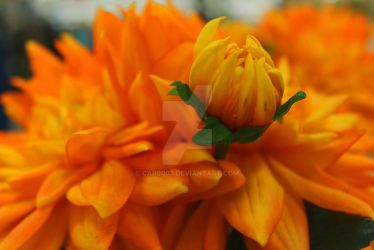 Yellow Flowers by car0003