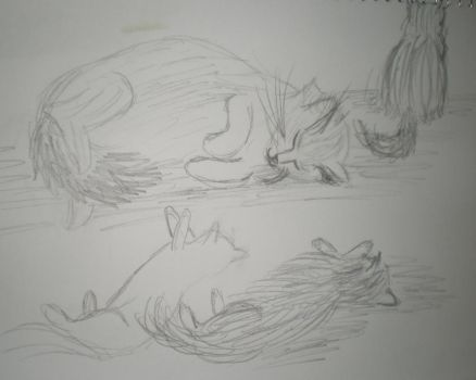 Whisker sketches by wickedwif
