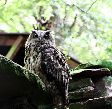 eagle owl by AlleyCat91