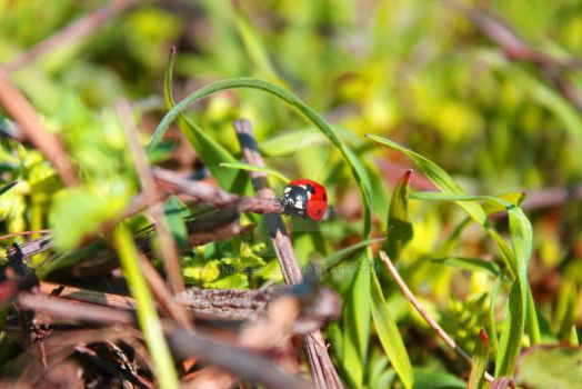 Lady bug by andreea09