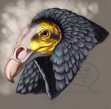 Cathartes burrovianus by comixqueen