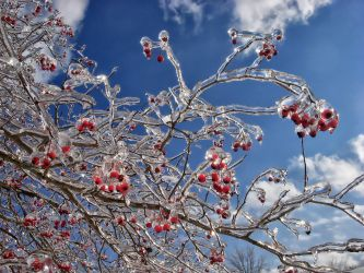 Ice Crystal Branches 02 by sixwings