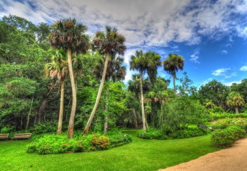 Leaning Trees in the Florida Sun by Enkphoto